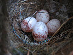 050 - Nest Egg